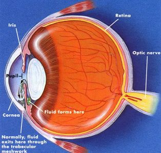 Types-of-Eye-Disease