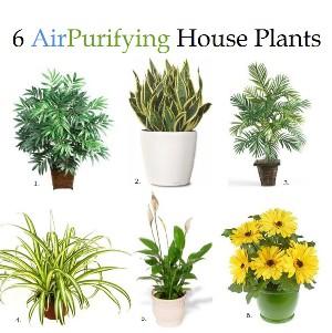 2012_06_18_2 6 Комнатных растений, которые улучшают качество воздуха