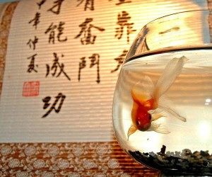kuda-nuzhno-stavit-akvarium-po-fen-shuyu-300x250 Как установить аквариум по фэн-шуй