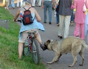 e13121d7a806-300x237 Как защитить ребенка от нападения бродячей собаки