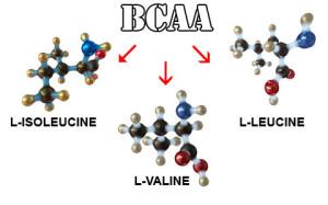 bcaa_aminokisloty-300x187 ВСАА – аминокислоты