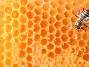 fonstola.ru-125618-300x225 Пчела – святая посланница