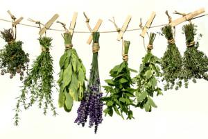 fo_trocknen-300x200 Травы и фрукты от простуды