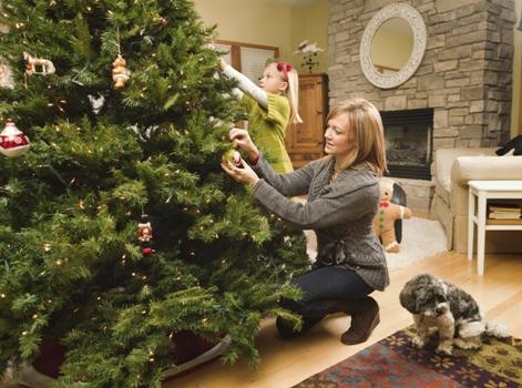 PreparerNoel Где купить качественную елку в СПБ на Новый Год