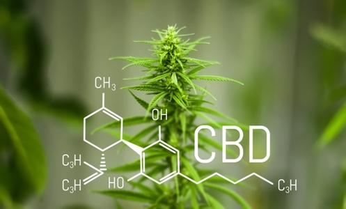 bigstock-Chemistry-Cannabis-Cbd-Cannab-275971441 CBD зарекомендовал себя в терапии очень серьезных заболеваний